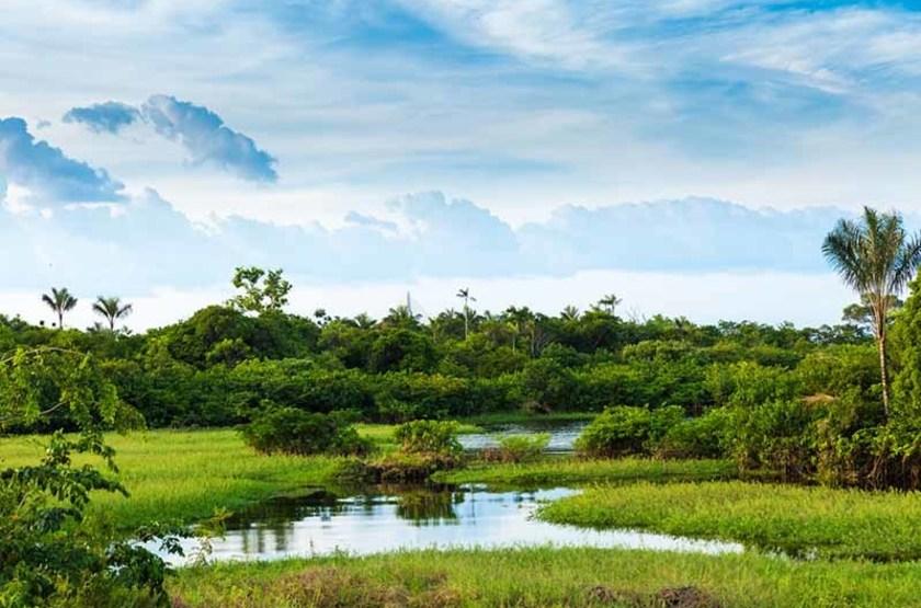 Pantanal, Amazonie, Brésil