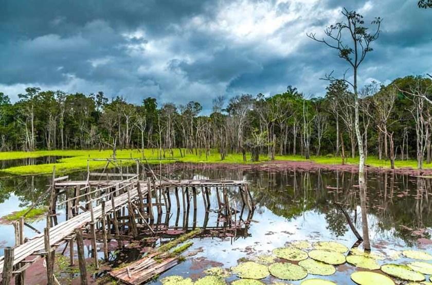 Wetlands, Pantanal, Brésil