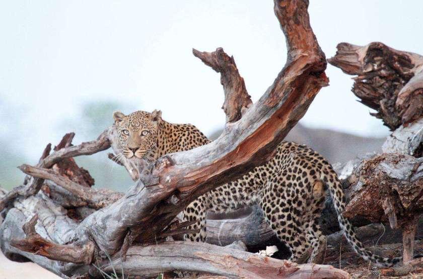 Safari en 4x4 à Camp Hwange, Zimbabwe