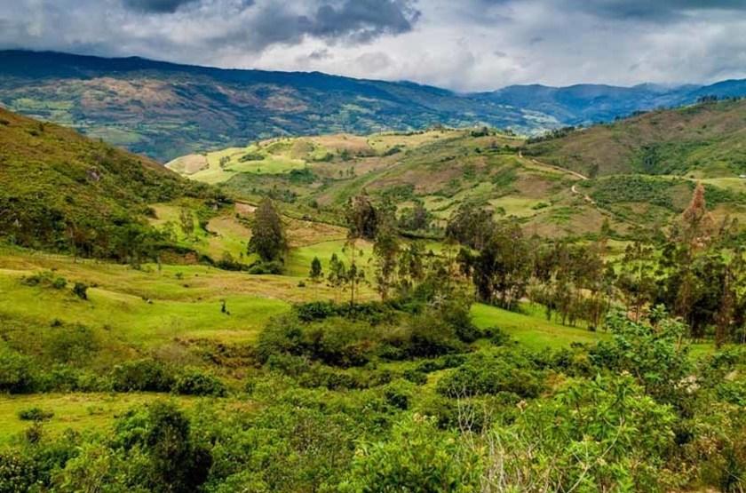 Forêt près de Leymebamba, Pérou