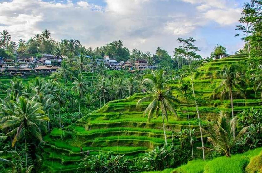 Rizières de Tegallalang, Ubud, Indonésie