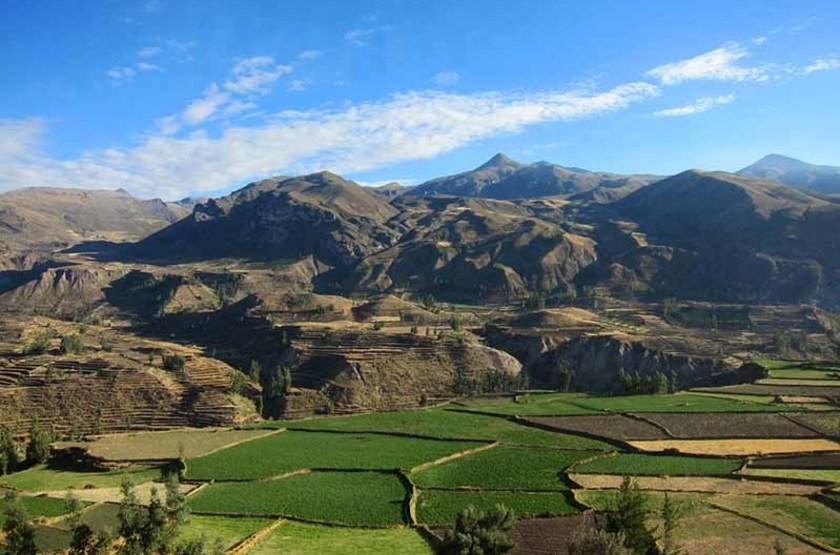 Terrasses du canyon Colca, Pérou