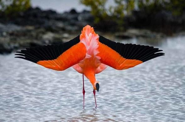 Safari aux Galapagos, voyage Amériques