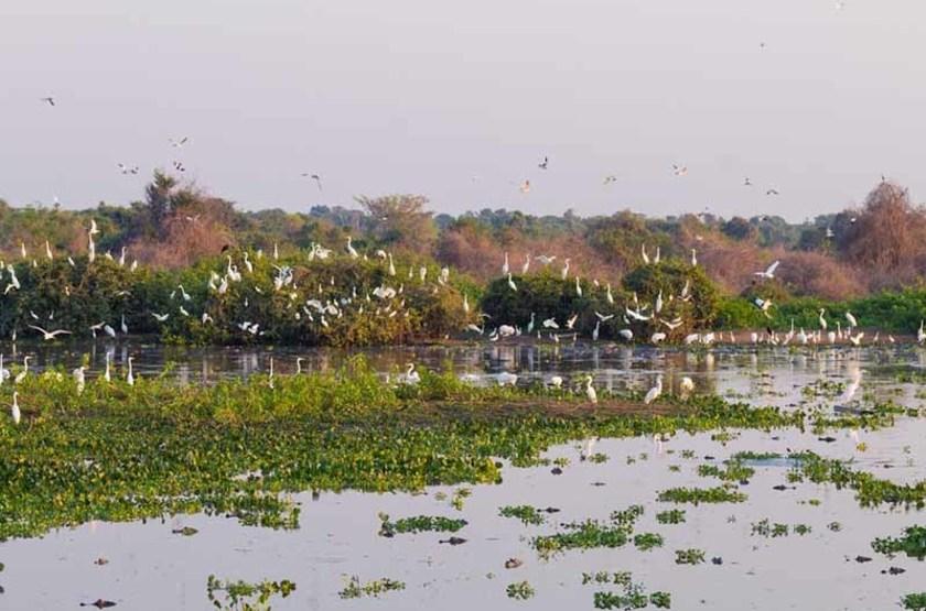 Pantanal, Bresil