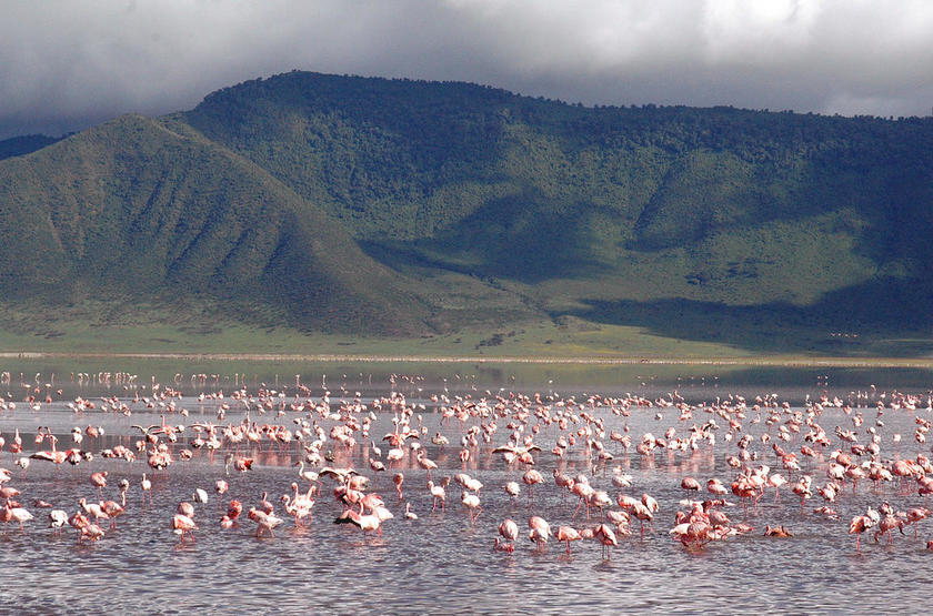 Ngorongoro flamingo lake slideshow