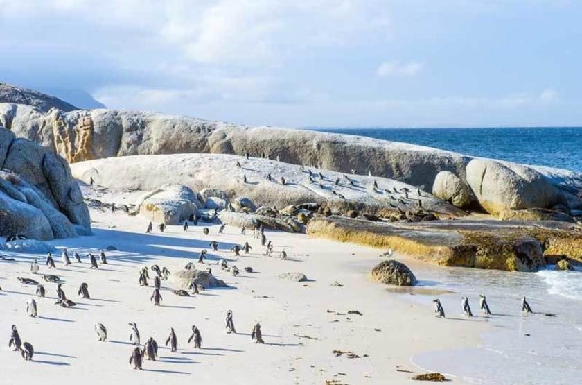 Pingouins sur Boulders Beach, Afrique du Sud