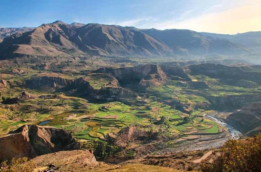 Terrasses du Canyon de Colca, Pérou