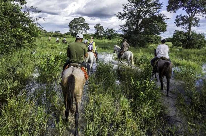 Voyage au Pantanal, Brésil