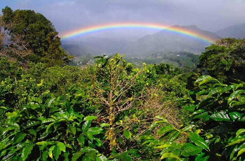Arc en ciel et plantation de café, Boquete, Panama
