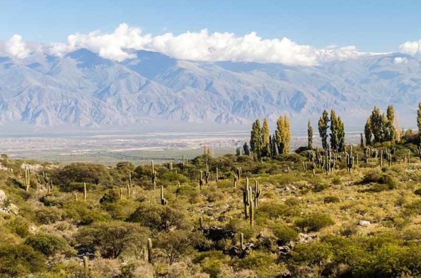 Paysage de cactus près d'Amaicha del Valle, Argentine