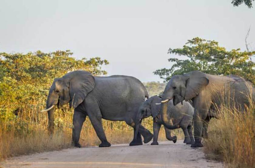 Éléphants, Parc National Kruger, Afrique du Sud