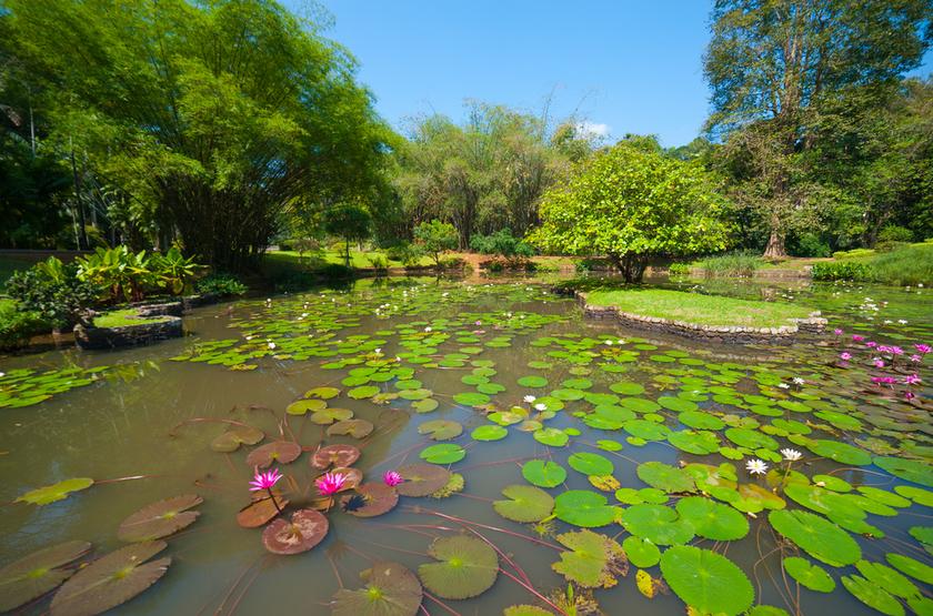 Jardin botanique, Peradeniya, , Sri Lanka