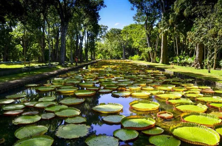 Ile Maurice, jardin pamplemousses