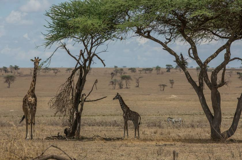 Les plaines du serengeti  namiri slideshow