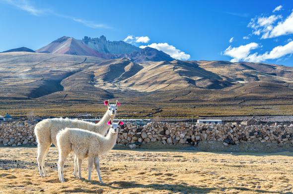 Voyage en famille, les déserts de Chili et de Bolivie, le sel de la magie, voyage Amériques