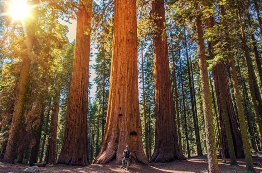 Séquoias géants, Californie