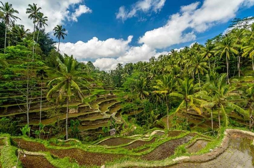 Circuit en Indonésie, rizières en terrasses, Ubud, Bali