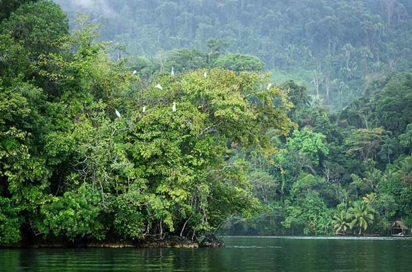 Oiseaux survolant le fleuve Rio Dulce, Guatemala