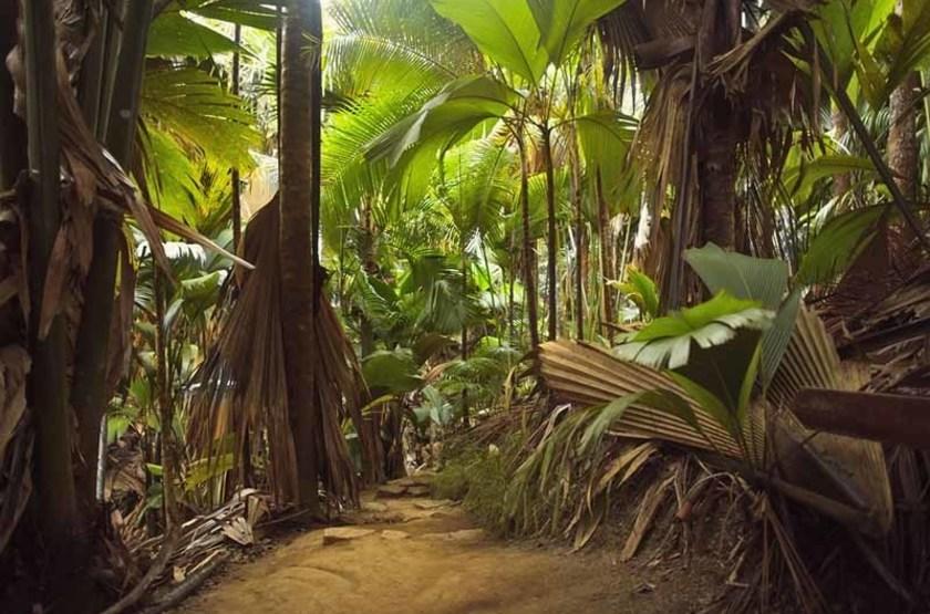 Réserve naturelle Vallée de Mai, île de Praslin, Seychelles