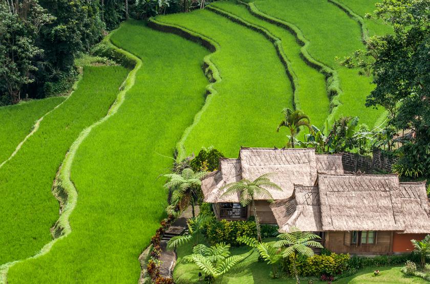 Rizière de Bedugul, Bali, Indonesie