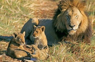 Zambie : Sur les traces du lion et du léopard, voyage Afrique