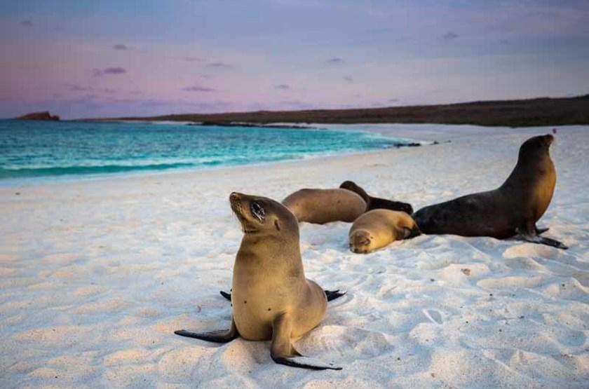 Otaries, Îles Galapagos