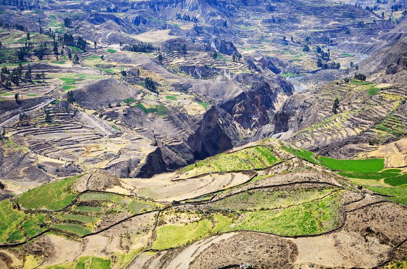 Canyon de Colca, Perou