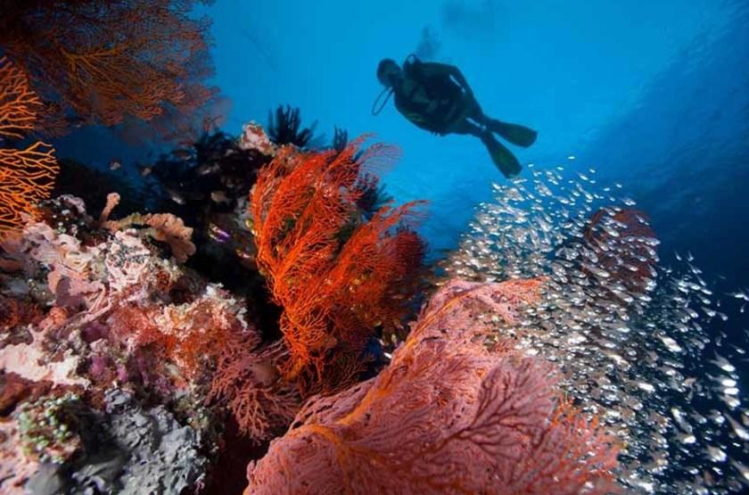 Plongée sous marine aux Seychelles