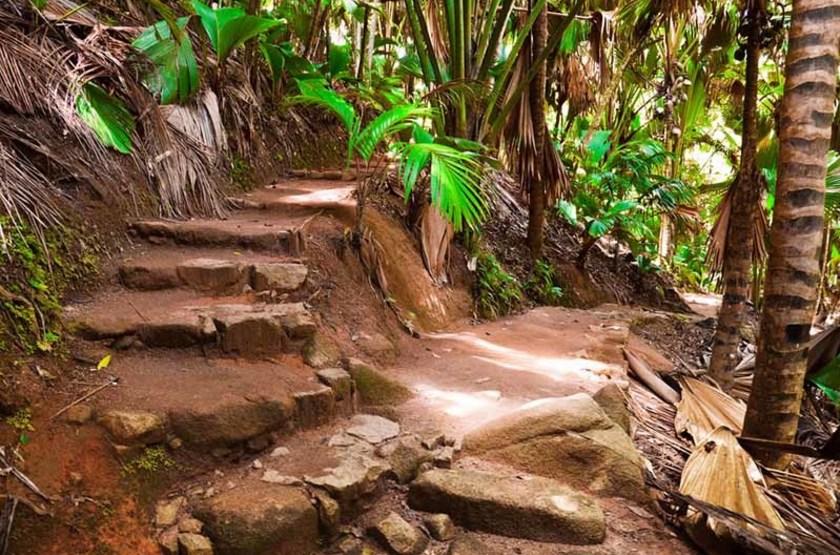 Vallée de Mai, Seychelles