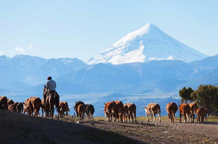 Gaucho et volcan Lanin en Patagonie, Argentine
