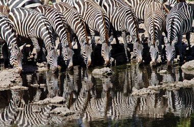 Safari privé et détente au bord de l'eau, voyage Afrique