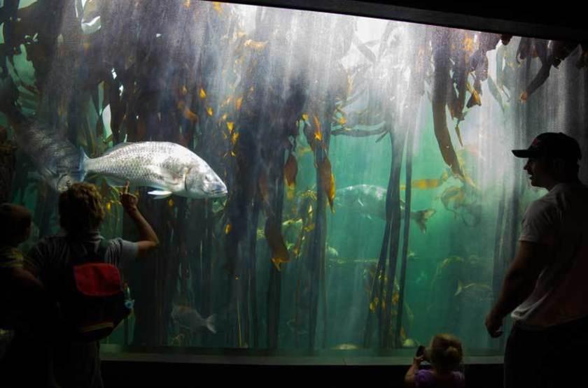 Aquarium de Cape Town, Afrique du Sud