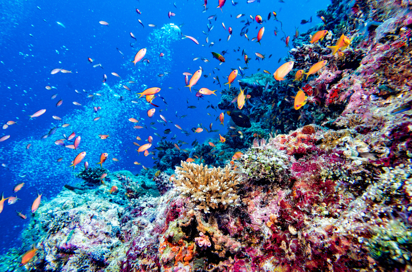 Shutterstock 585140755 slideshow