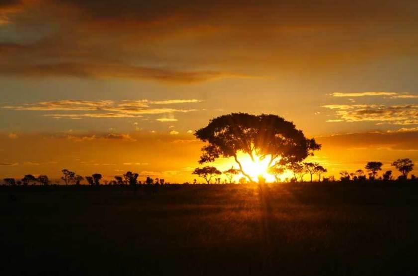 Coucher de soleil sur le bush, Afrique du Sud