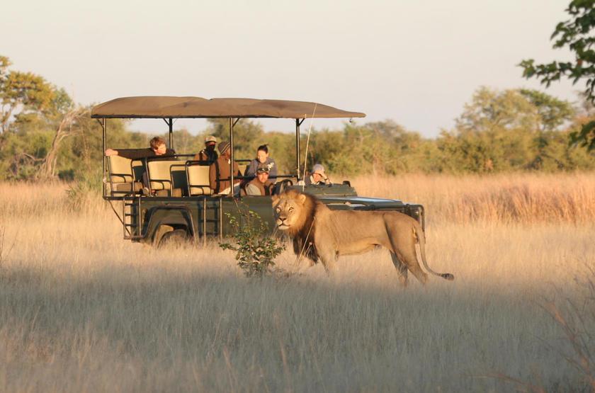 Zimbabwe - Camp Hwange - Safari - Lion