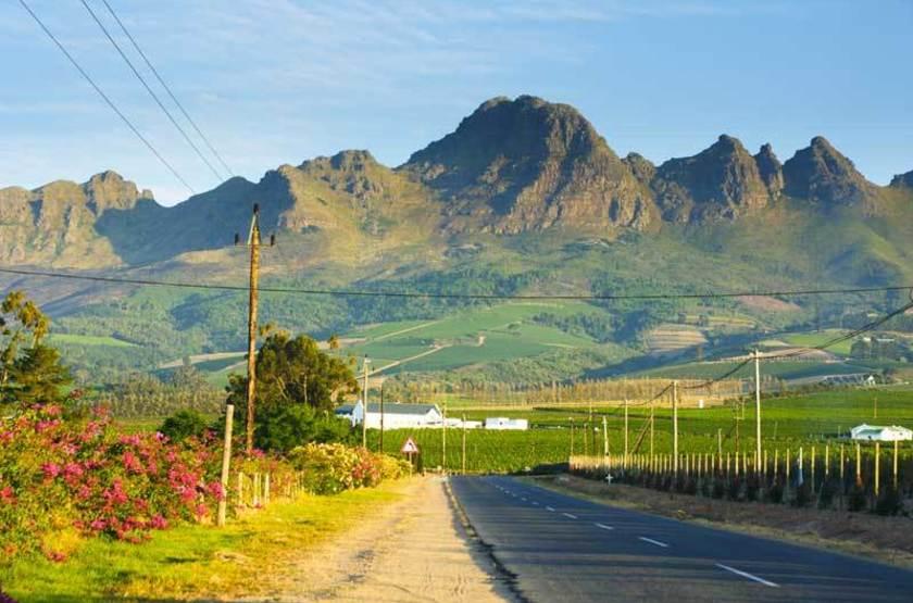 Paysage de vignes, Afrique du Sud